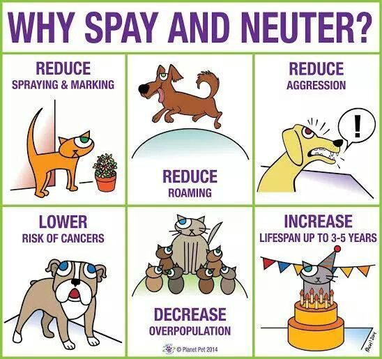 Does Any Pet Insurance Cover Spaying