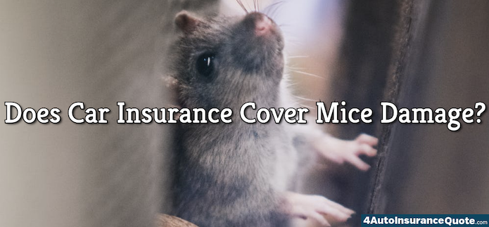 Does Car Insurance Cover Mice Damage? (Rodents Chewing On ...