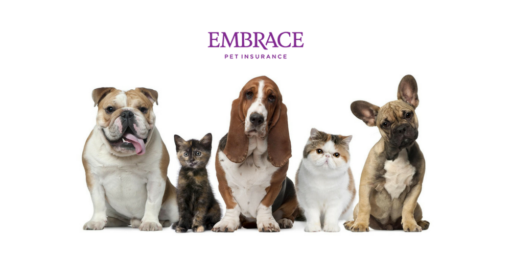 Does Embrace Pet Insurance Cover Spay And Neuter