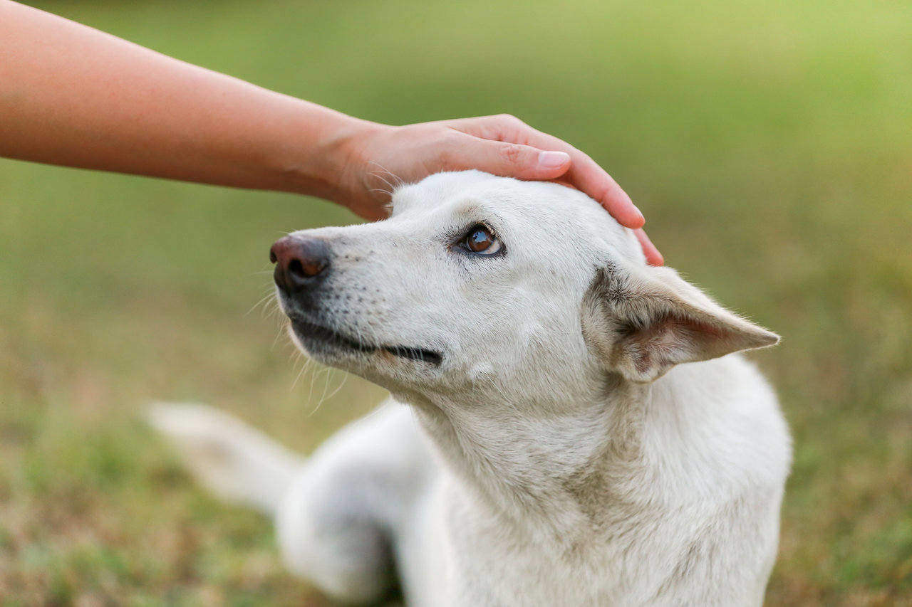 Does pet insurance cover cataract surgery?