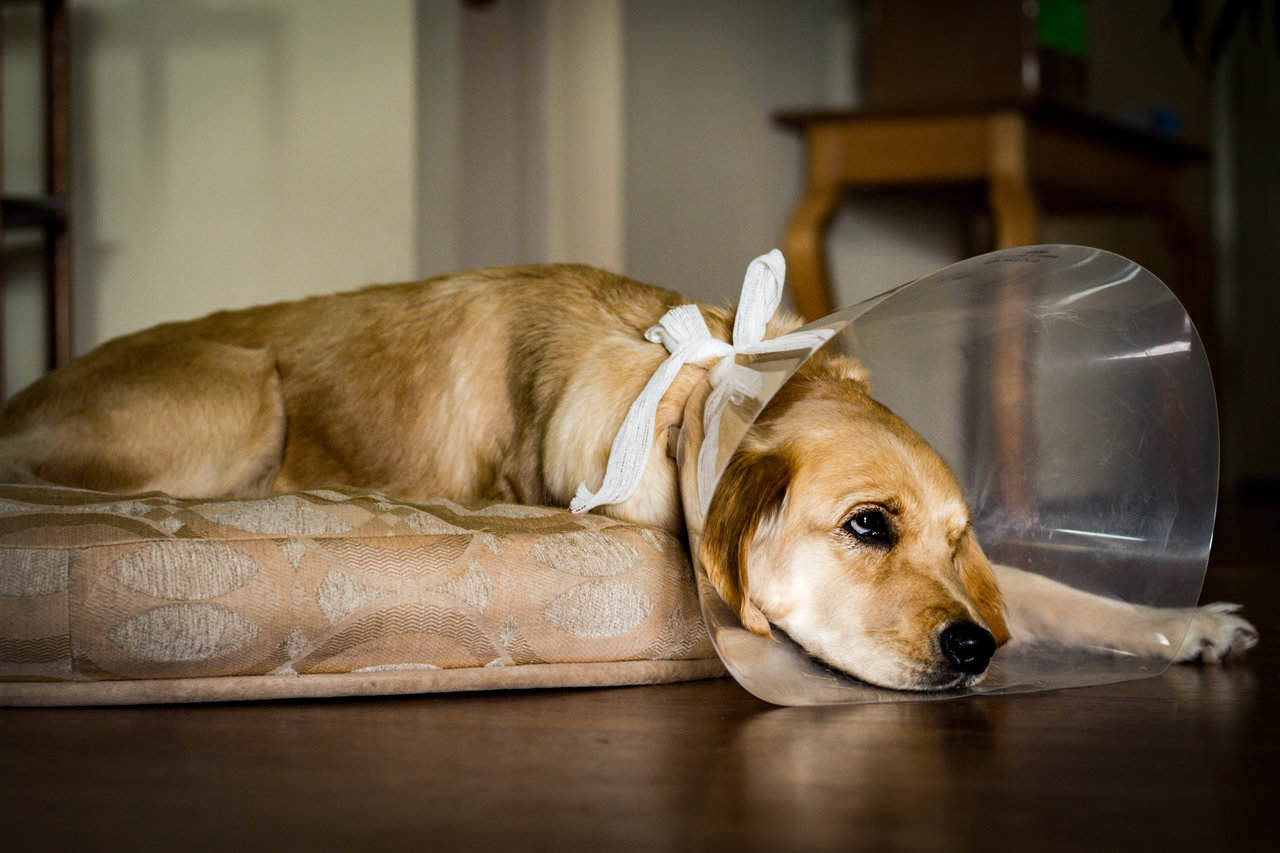 Does pet insurance cover spaying and neutering?
