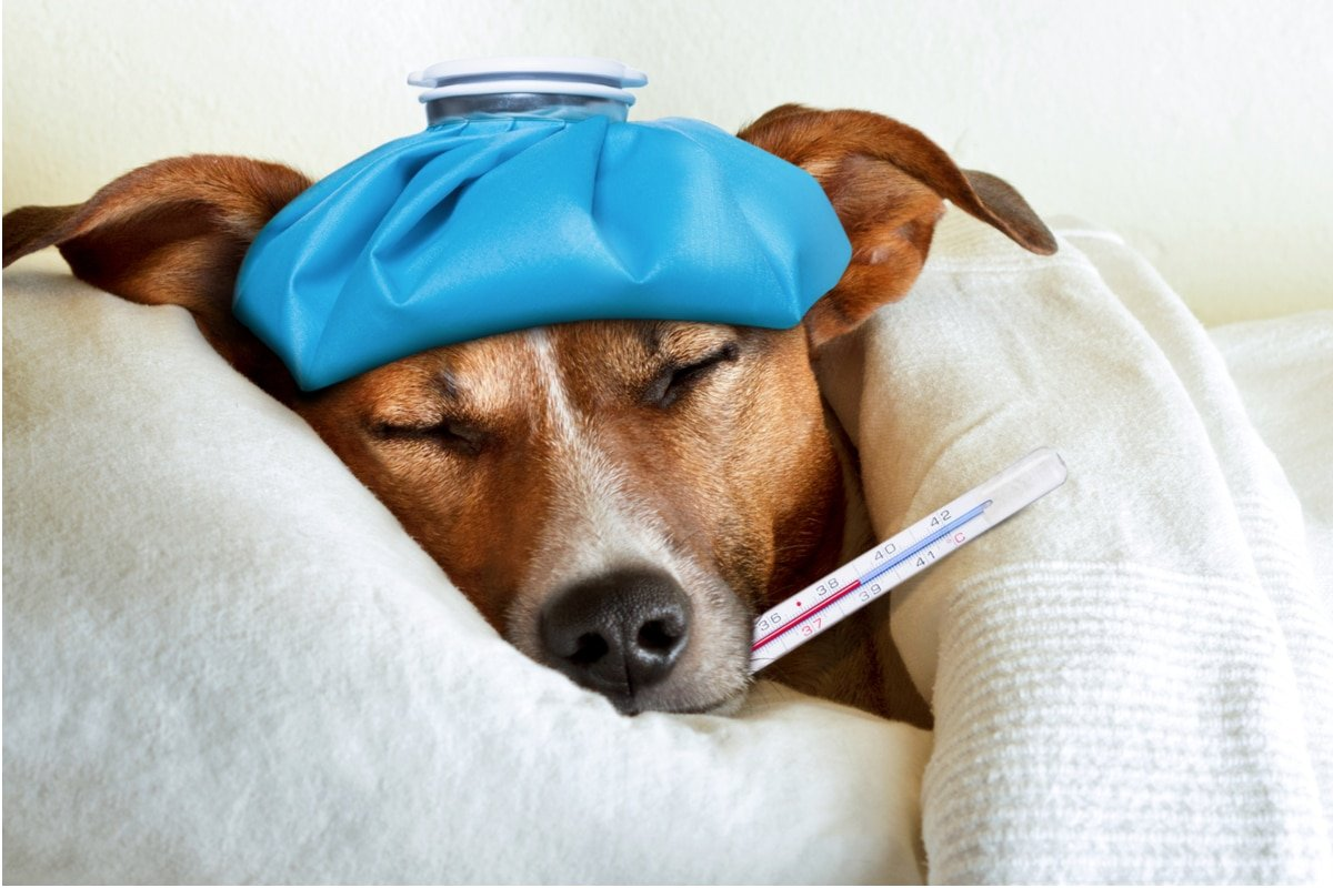 Pet Insurance That Covers Pre