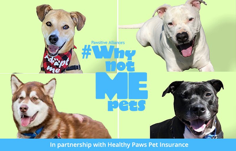Why Not Me? Pets for September